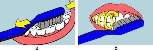 """a) """"K"""" = Kauflächen putzen: Begonnen wird bei den Kauflächen. Die Bürste wird mit horizontalen Hin- und Herbewegungen geführt.Alle Kauflächen werden so geputzt. b) """"A"""" = Aussenflächen putzen: Die Schneidezähne werden aufeinander gestellt, die Zahnreihen bleiben geschlossen und die Bürste malt große Kreise auf die Außenflächen. Dabei wird die Zahnbürste ganz hinten angesetzt, wird rundherum am Zahnbogen entlanggeführt, bis man auf der anderen Seite ankommt."""