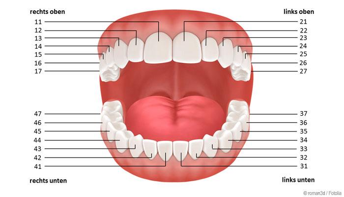 Das internationale Zahnschema - jeder Zahn hat eine eindeutige Nummer